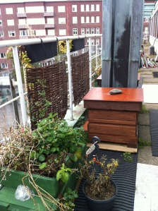 Bee hives at the roof of Perho restaurant school, Helsinki, 2013