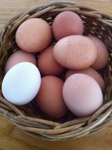 Friske æg fra den økologiske gårdbutik Stengården.