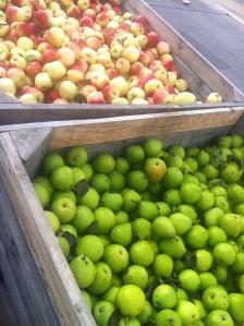 Danske pærer og æbler er på toppen lige nu - og der er mange slags at vælge imellem. Foto Klinken 2014
